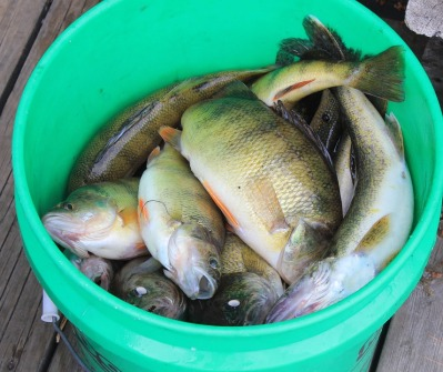 fish-in-bucket.jpg