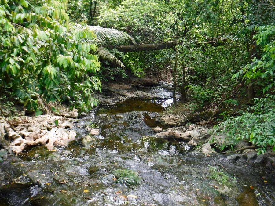 Stream Guanacaste National Park