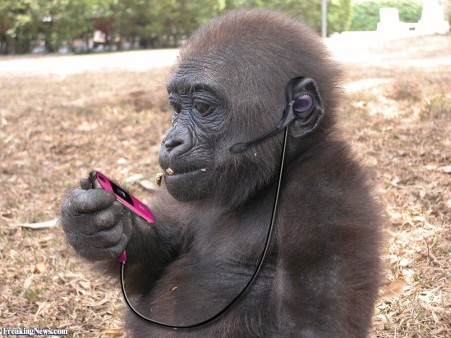 monkey with a phone