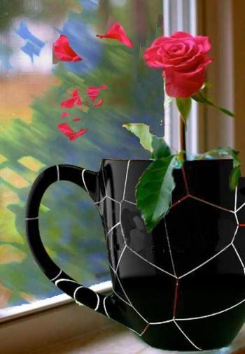 rose petals drifting