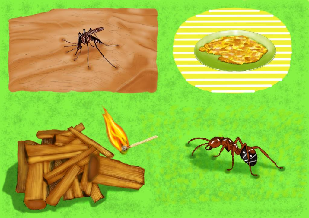Mosquitoes and Fire ants for breakfast Berina Ogega