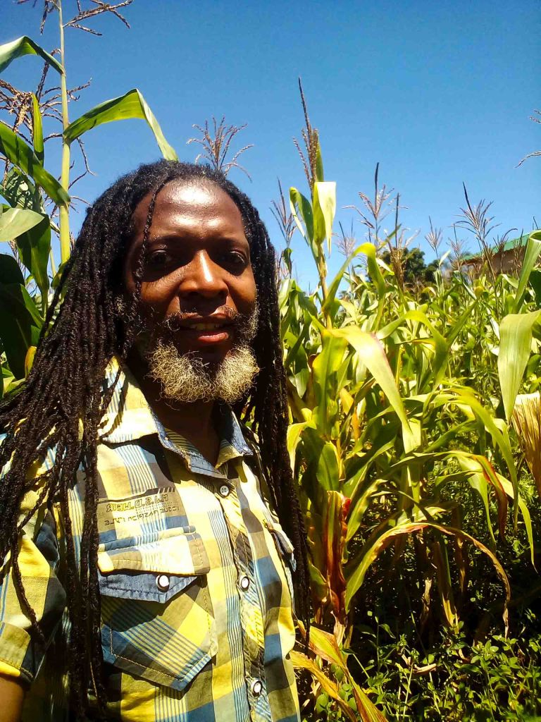 Beaton in a maize field