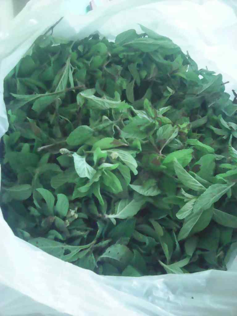 shopping bag full of zumbani leaves